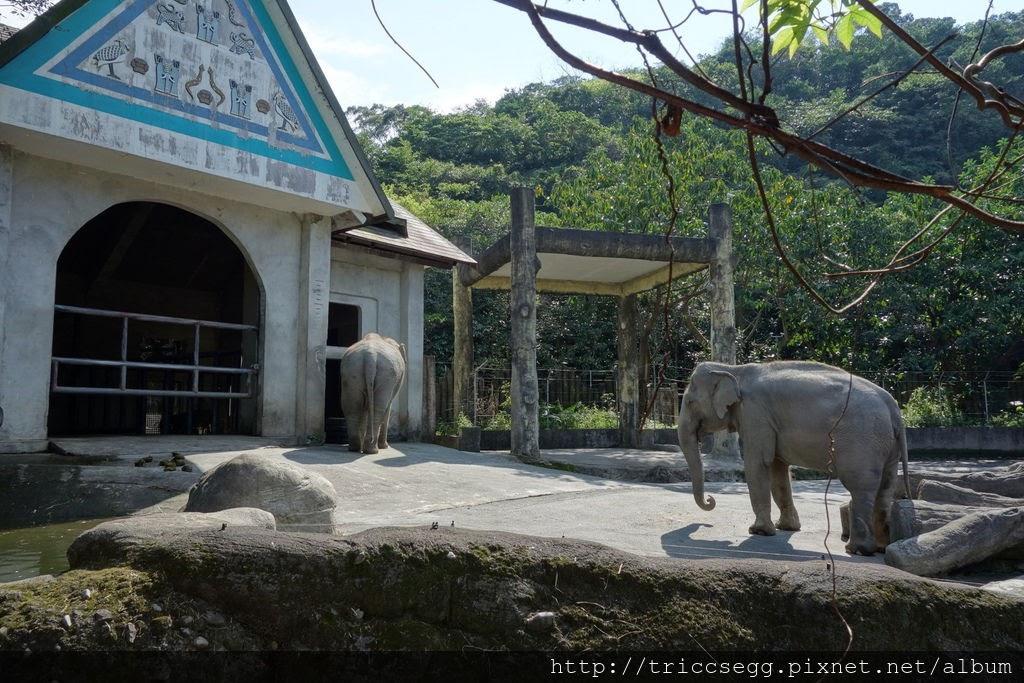 台北動物園(52).jpg