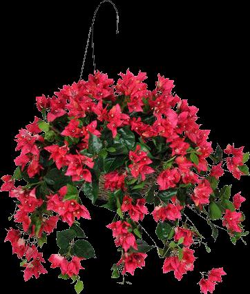 Plantas colgantes para tus jardines en png - Plantas colgantes ...