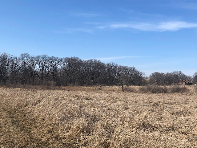 Where the prairie meets the woodlands at Bowes Creek Woods Forest Preserve in Elgin, Illinois