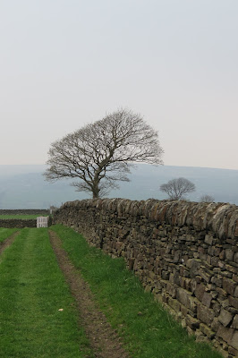 A dry stone wall runs from the left towards a tree on the far side of a field.