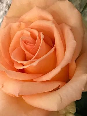 Apricotfarbene Rosen, Berghochzeit am Riessersee in Garmisch-Partenkirchen, Bayern, Hochzeitshotel, Hochzeitsplanerin Uschi Glas, Apricot, Rosé, Marsalla, Pastelltöne