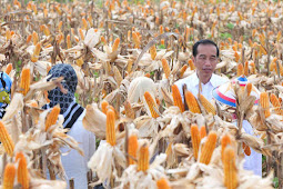 Selama 2018, Indonesia Ekspor 380 Ribu Ton dan Impor 150 Ribu Ton Jagung