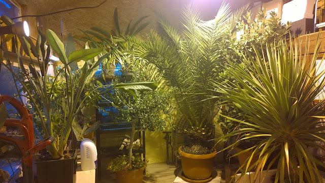 Blick ins Palmenhaus, fehlt nur noch die Washingtonia (c) by Joachim Wenk
