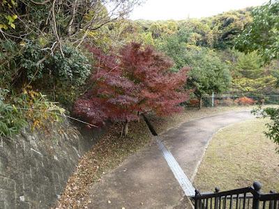 天野川トンネル カエデの紅葉