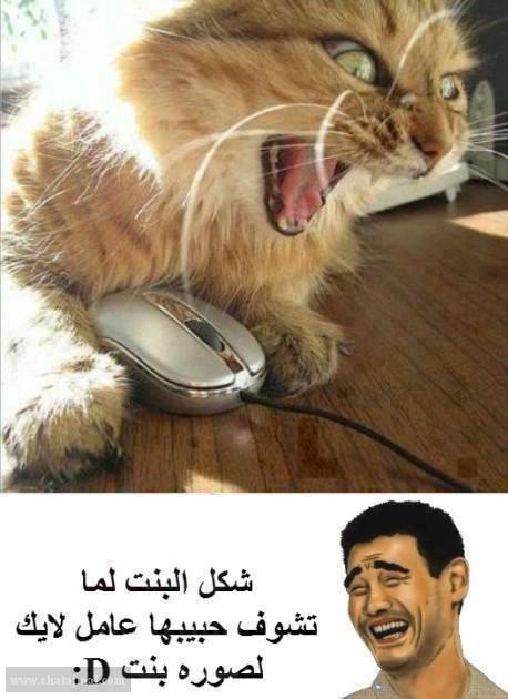 ههههههههههههههه funny_Photo_16.jpg