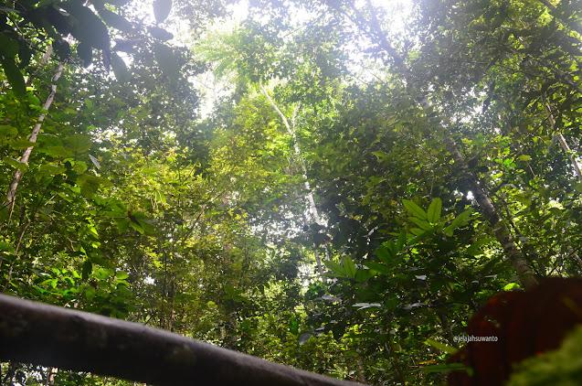 Hutan  Monkairi di sekitar Batu Lima Homestay Raja Ampat ⒸJelajahsuwanto