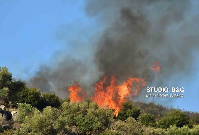 Υψηλός ο κίνδυνος και στην Αργολίδα για πυρκαγιές