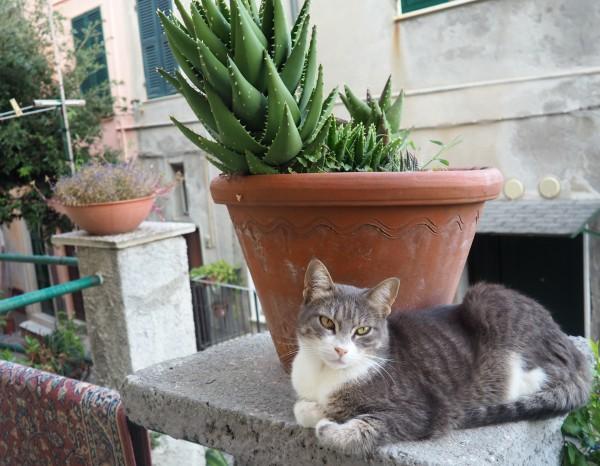 AirBnB cat