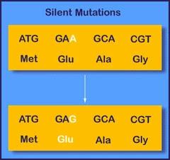 Silent mutation