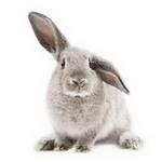rabbit in spanish