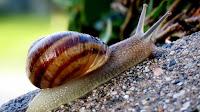 Snail photos_Gastropoda