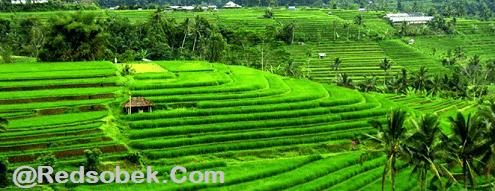 Tegalalang Tourism Site 3