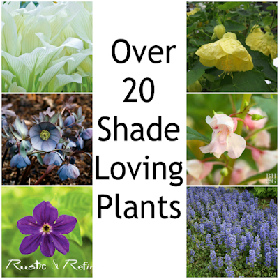 Over 20 Shade Loving Perennials  & Annuals