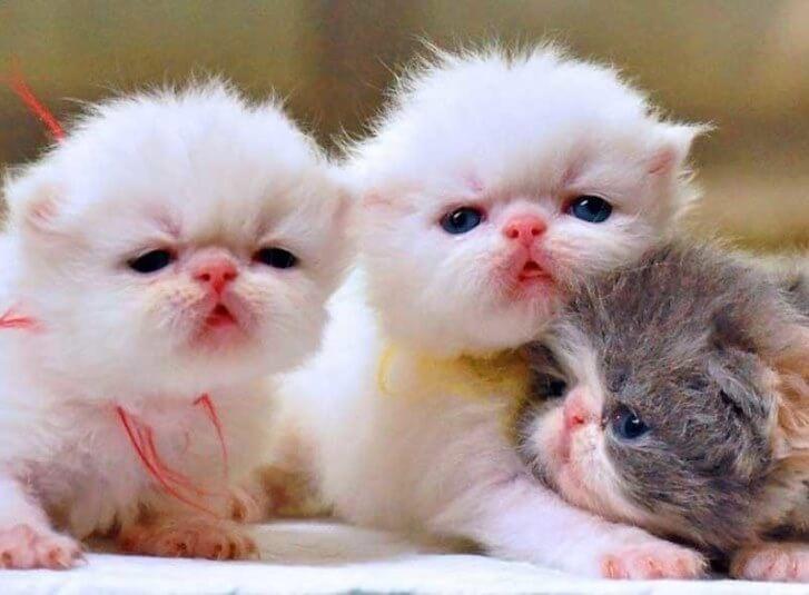 Kucing makan anak
