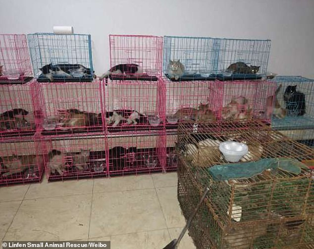 saved cats in china