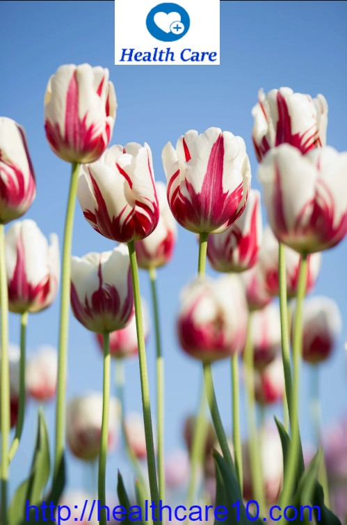 How Flowers Improve Our Emotional and Psychological Health