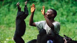 Hayvanlar Dünyayı Nasıl Görür?