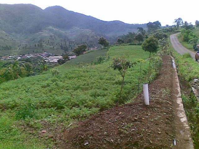 Foto%25285347%2529 Jual Tanah Di Puncak 2, Murah Jual tanah di cipanas jual tanah di puncak jual tanah di puncak2