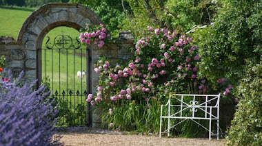 Rosa 'Constance Spry' en el origen de la serie 'English Rose'