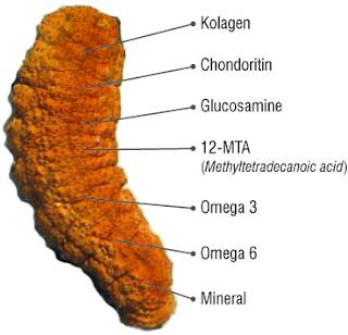 agen-walatra-gamat-emas-kapsul-di-sanggau