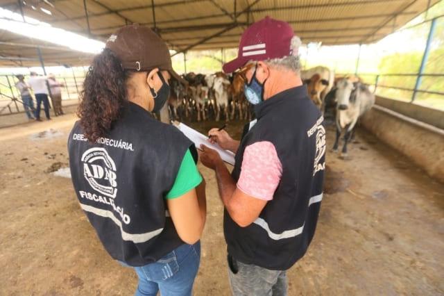 BA deve vacinar 3,5 milhões de animais contra a febre aftosa até o fim de novembro