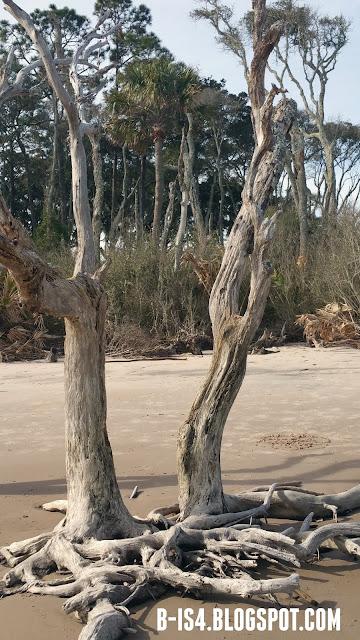Beach, Eco, Jacksonville