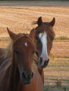 chevaux touraine