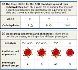 Pola pewarisan Satu Gen   Derajat dominansi, Hubungan derajat dominansi dengan fenotipe, Multi Alel, Pleiotropy, Pleiotropy adalah, Pola Pewarisan untuk satu gen atau lebih Epistatis, Pewarisan poligenik,