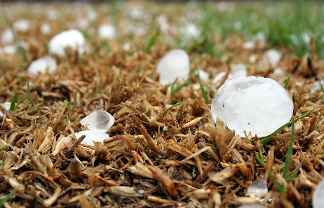 Compensation for crop loss due to hailstorm in 11 districts
