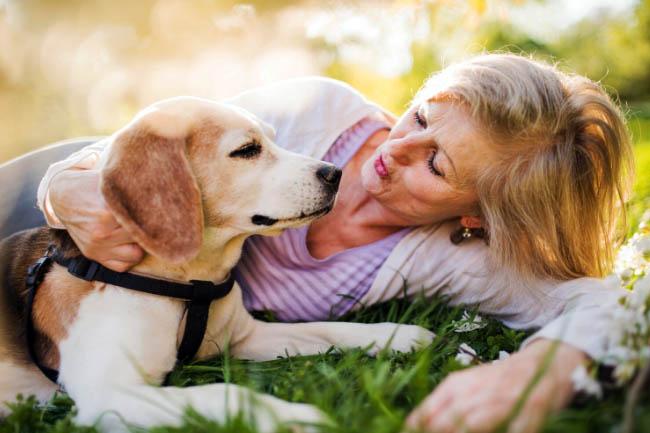 Jakie gesty rozumie pies?
