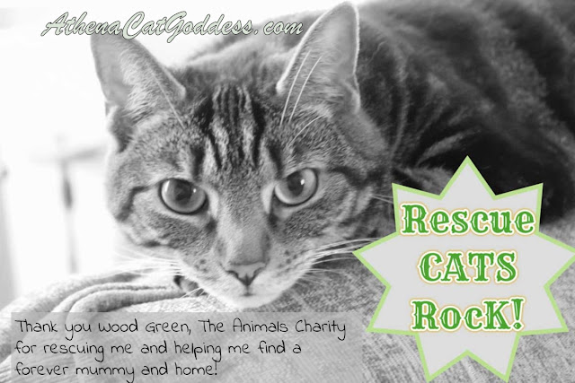 tabby cat with Rescue Cats Rock graphic