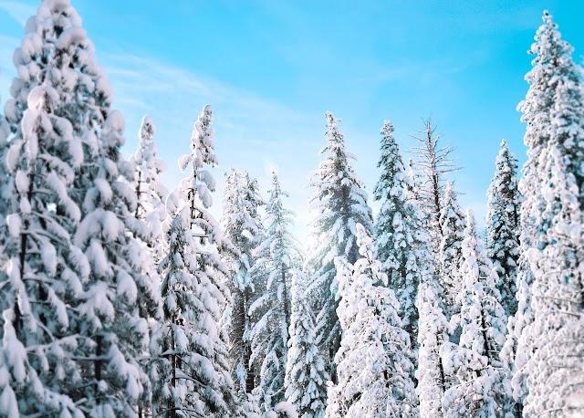 All India Weather Forecast 19 Feb 2020: Snowfall in J&K, Sikkim & Arunachal Pradesh