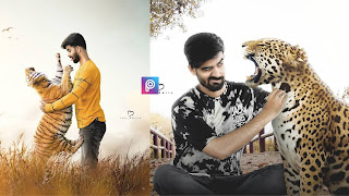 Tiger Photo Editing
