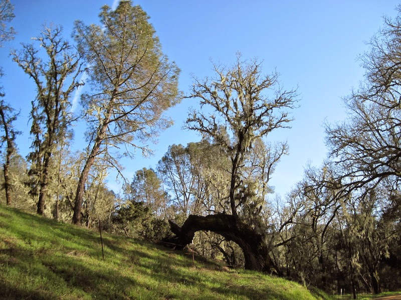 Trees Along Dover Canyon Road, Templeton, ©B. Radisavljevic