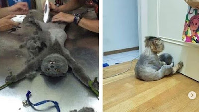 Salon Anjing