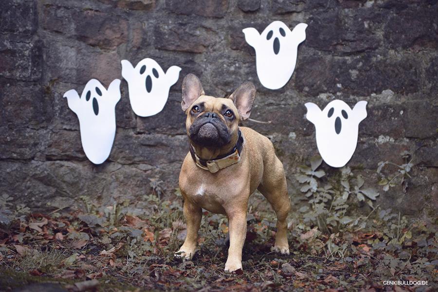 Hundeblog Monatspfoto Oktober: Ach du Schreck! Hund Bully Halloween Gespenster