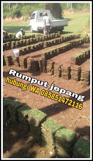 Penjual rumput jepang tuban termurah ( foto kerja kita di tuban ) tahun 2021