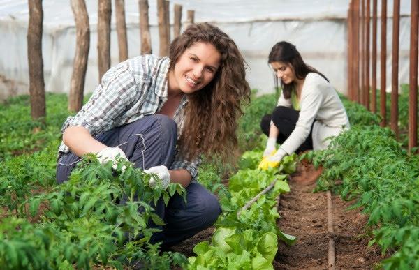 Νέα προκήρυξη Νέων Αγροτών με 100 εκατ. ευρώ μέσα στο 2020