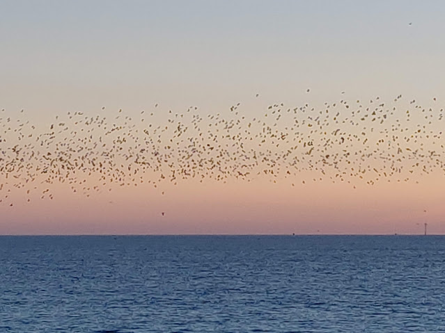 birds at dusk over sea at Brighton