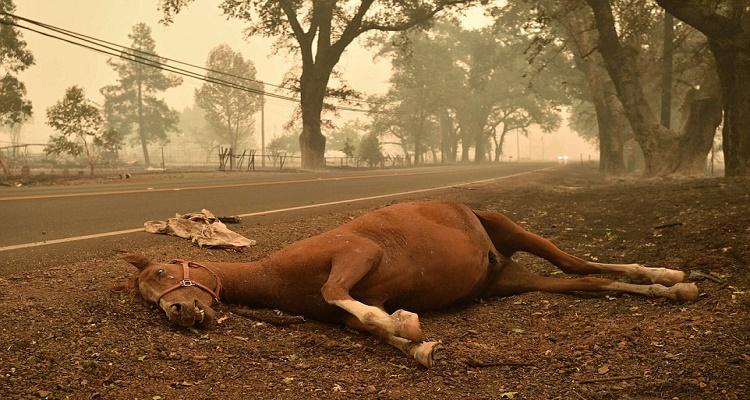لماذا يجب قتل الحصان اذا إنكسرت ساقه...معلومة صادمة