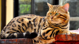 http://cnmbvc.blogspot.com/2017/05/7-priciest-anak-kucing-di-bumi.html