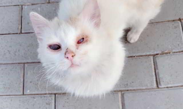 В Курске прохожие делали селфи со слепым бездомным, голодным котиком,….и никто не накормил… Видео!