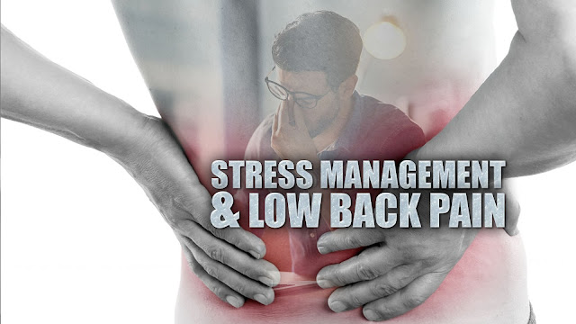 Stress Management & Low Back Pain Cover Image | Dr. Alex Jimenez | El Paso, TX Chiropractor