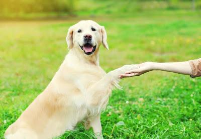 Educa tu perro