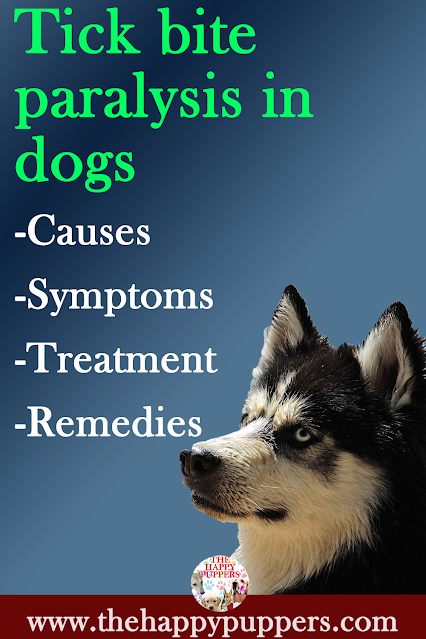 Tick bite paralysis in dogs. Causes, symptoms, treatment and home remedies