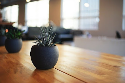 sukulen cantik di atas meja