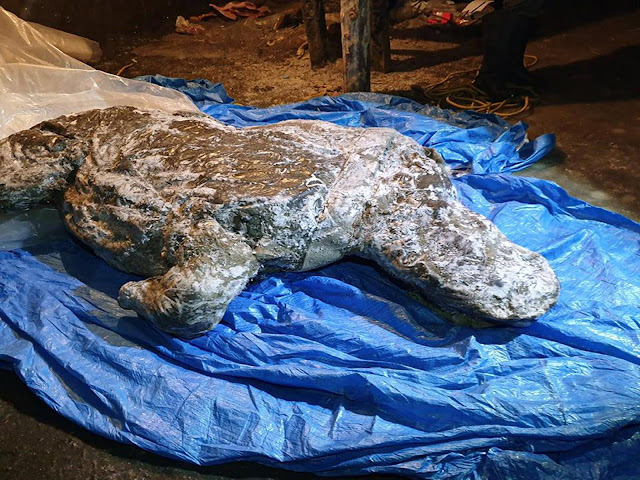 Well-preserved Ice Age woolly rhino found in Siberia