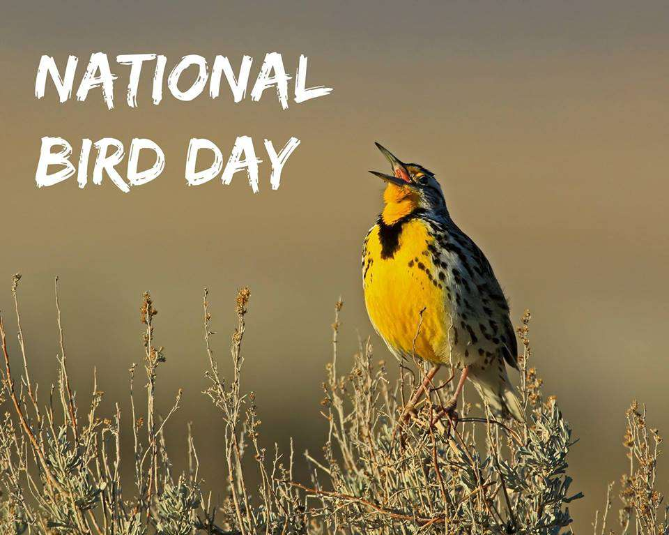 National Bird Day Wishes for Instagram