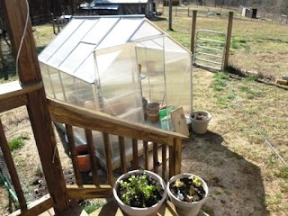 Perfect greenhouse for diverse small homestead! #homesteader #homesteadgarden
