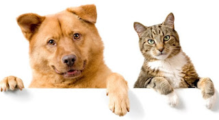 Fakta Atau Mitos? Pemilik Anjing Senang Kerja Keras, Pemelihara Kucing Orang Pemalu, Yuk Cek Disini